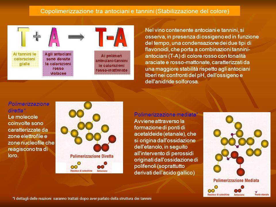 Copolimerizzazione tra antociani e tannini (Stabilizzazione del colore)
