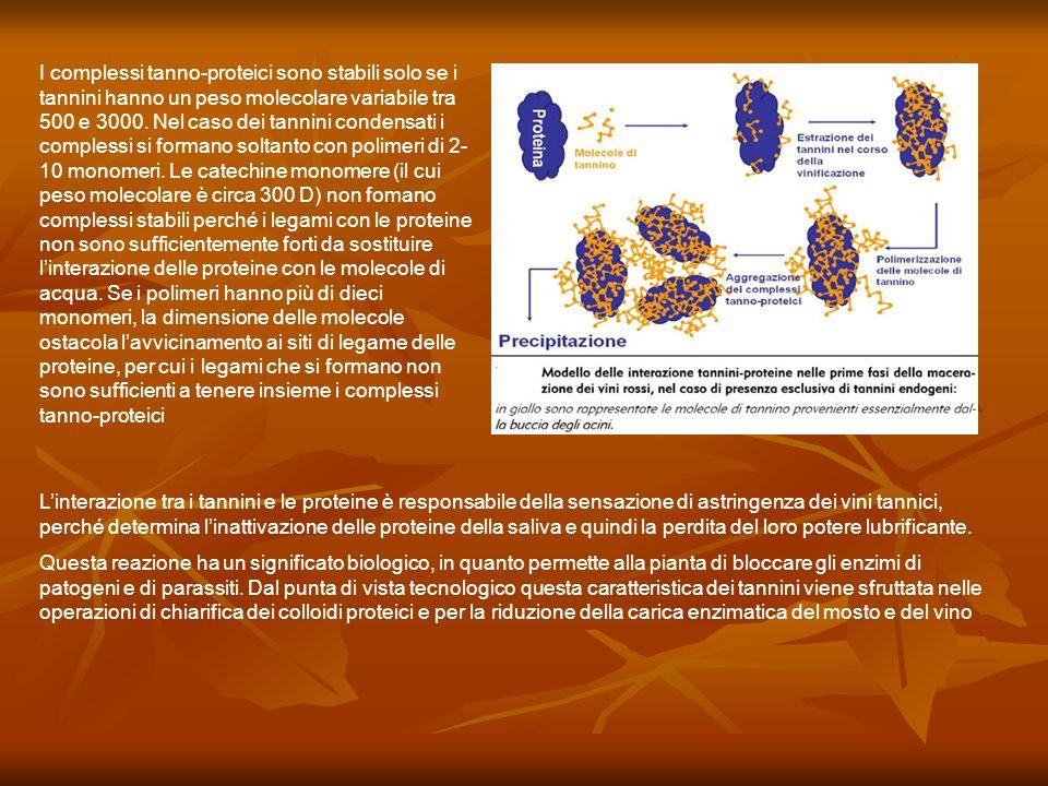 I complessi tanno-proteici sono stabili solo se i tannini hanno un peso molecolare variabile tra 500 e 3000. Nel caso dei tannini condensati i complessi si formano soltanto con polimeri di 2-10 monomeri. Le catechine monomere (il cui peso molecolare è circa 300 D) non fomano complessi stabili perché i legami con le proteine non sono sufficientemente forti da sostituire l'interazione delle proteine con le molecole di acqua. Se i polimeri hanno più di dieci monomeri, la dimensione delle molecole ostacola l'avvicinamento ai siti di legame delle proteine, per cui i legami che si formano non sono sufficienti a tenere insieme i complessi tanno-proteici