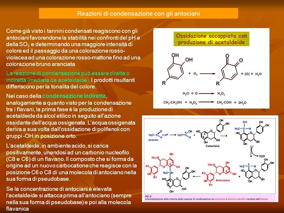 Reazioni di condensazione con gli antociani