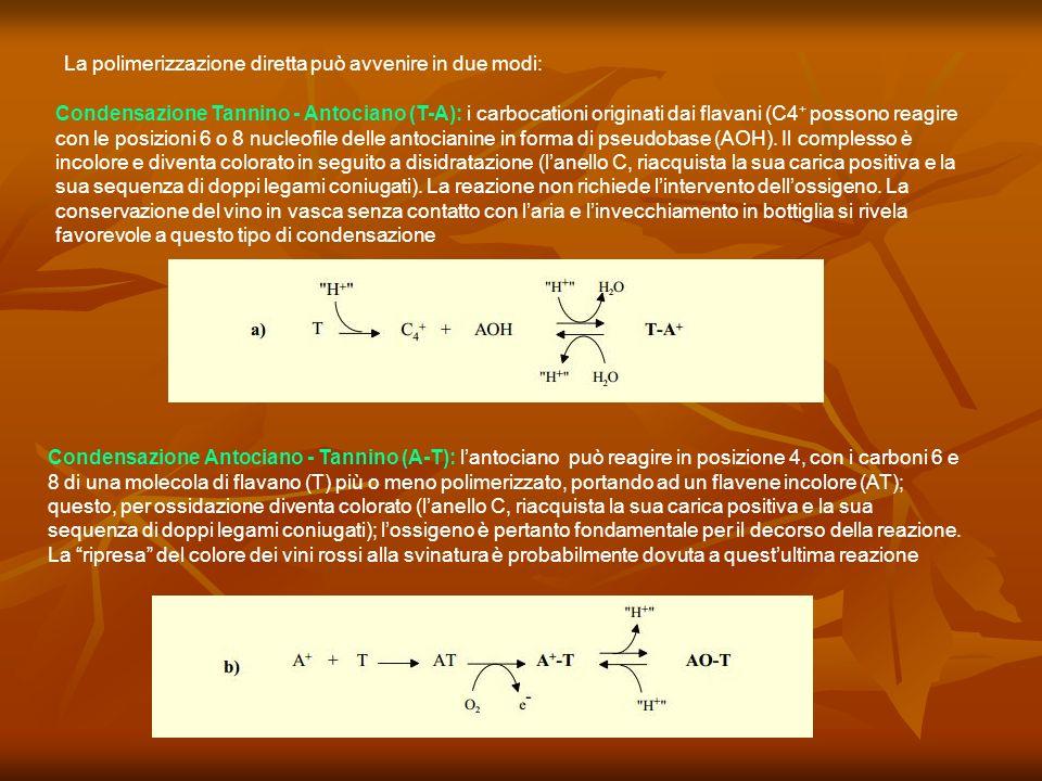 La polimerizzazione diretta può avvenire in due modi: