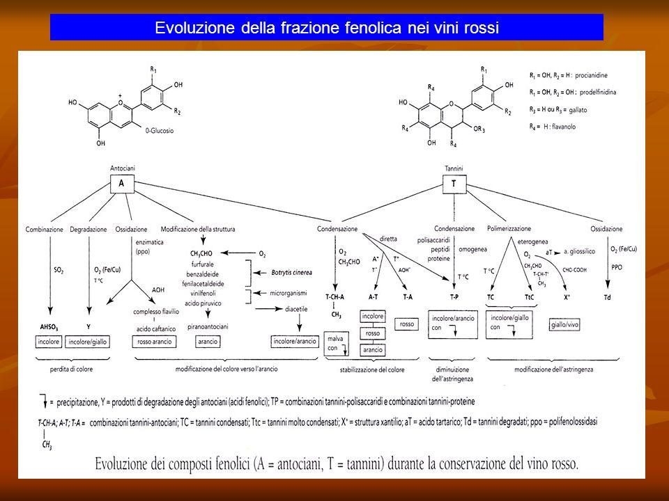 Evoluzione della frazione fenolica nei vini rossi