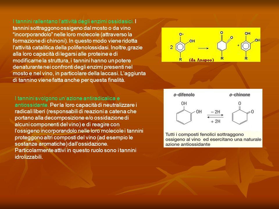 I tannini rallentano l'attività degli enzimi ossidasici