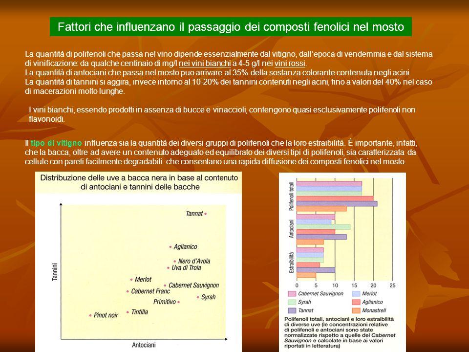 Fattori che influenzano il passaggio dei composti fenolici nel mosto
