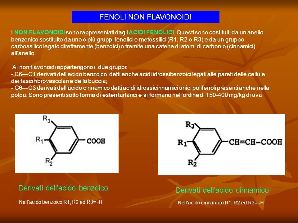 Derivati dell'acido benzoico Derivati dell'acido cinnamico