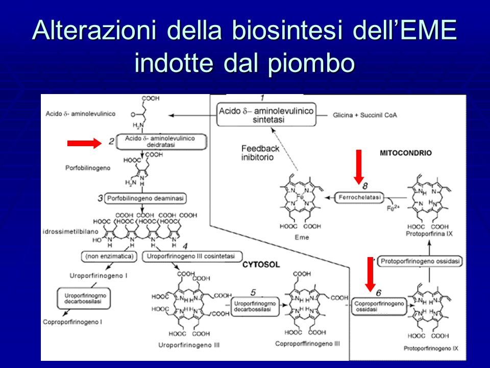 Alterazioni della biosintesi dell'EME indotte dal piombo