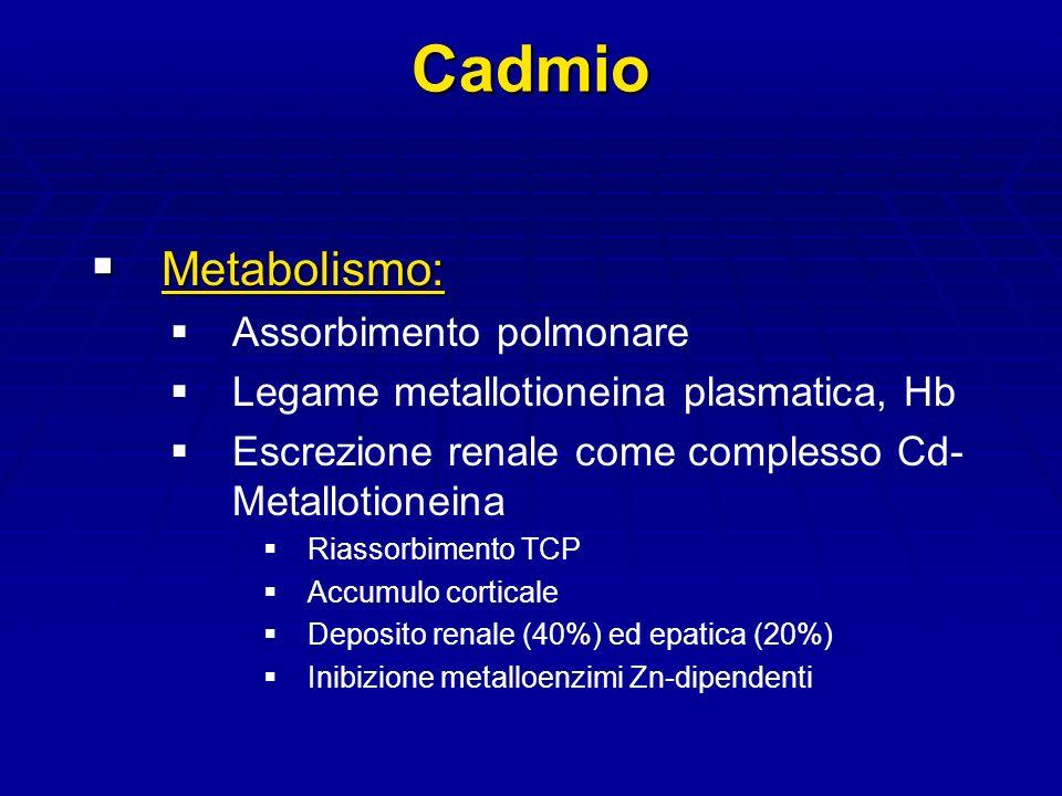 Cadmio Metabolismo: Assorbimento polmonare