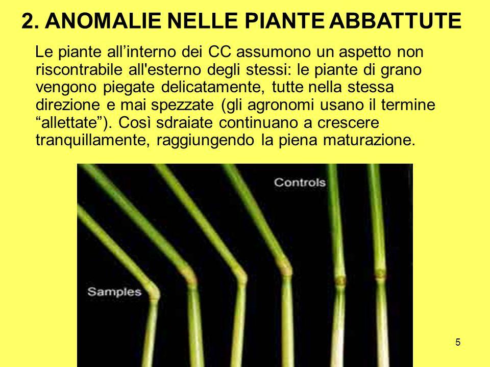 2. ANOMALIE NELLE PIANTE ABBATTUTE