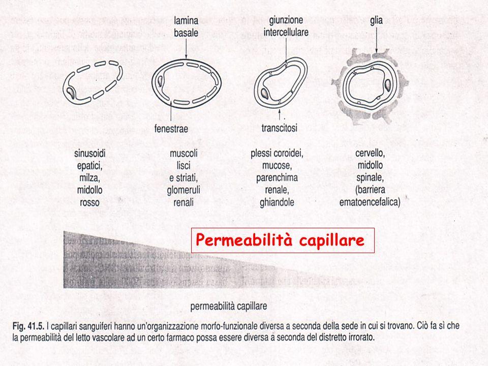 Permeabilità capillare