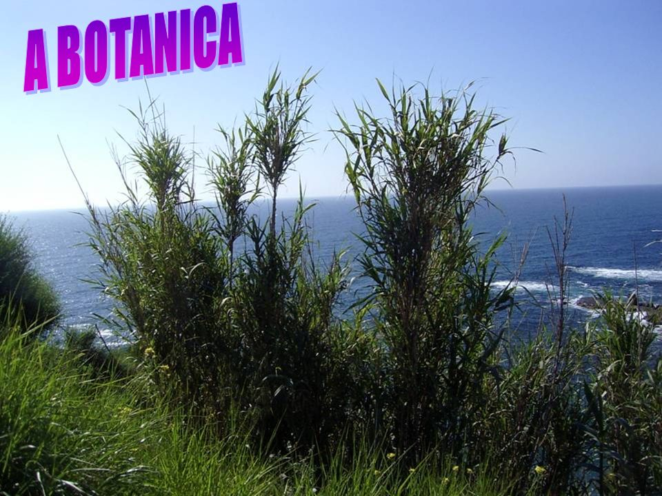 A BOTANICA
