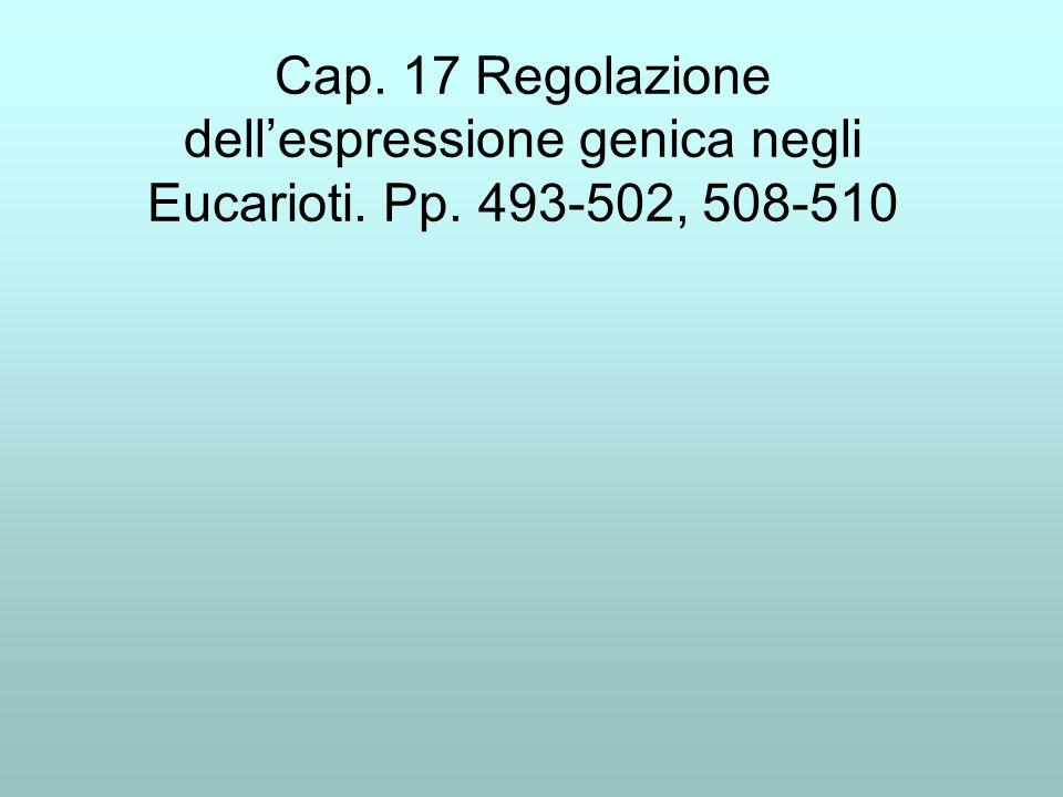 Cap. 17 Regolazione dell'espressione genica negli Eucarioti. Pp