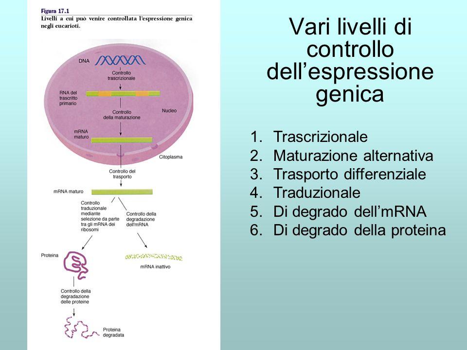 Vari livelli di controllo dell'espressione genica