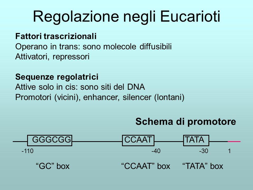Regolazione negli Eucarioti