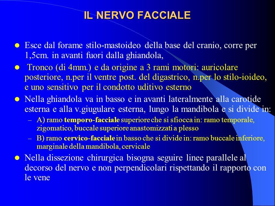 IL NERVO FACCIALE Esce dal forame stilo-mastoideo della base del cranio, corre per 1,5cm. in avanti fuori dalla ghiandola,