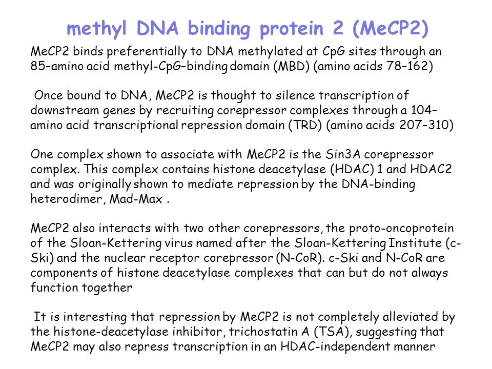 methyl DNA binding protein 2 (MeCP2)