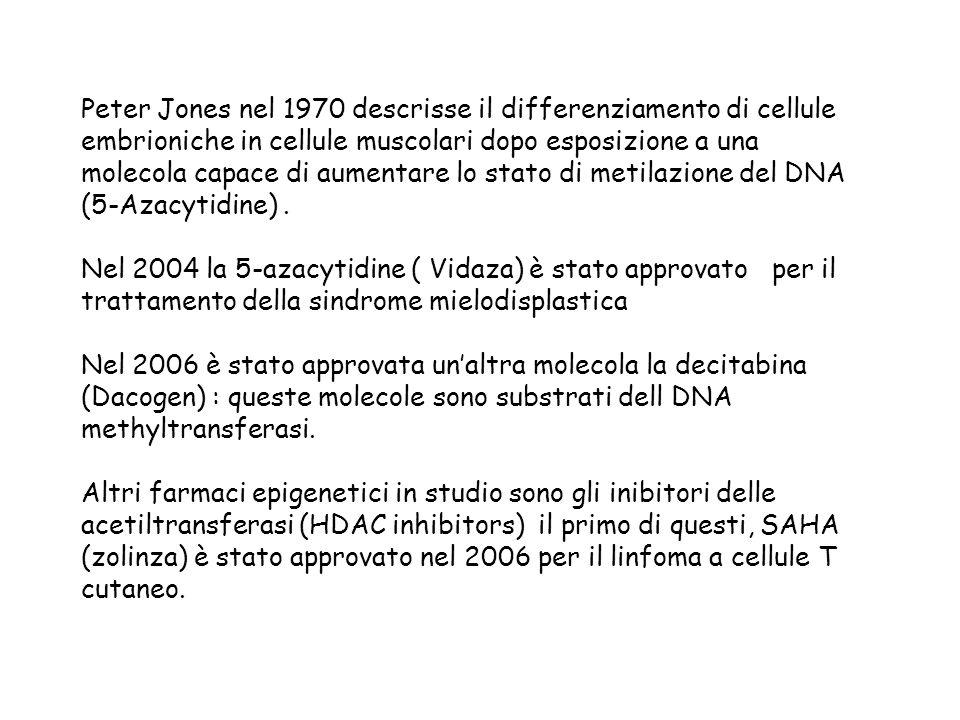 Peter Jones nel 1970 descrisse il differenziamento di cellule embrioniche in cellule muscolari dopo esposizione a una molecola capace di aumentare lo stato di metilazione del DNA (5-Azacytidine) .