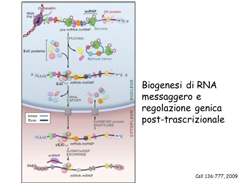 Biogenesi di RNA messaggero e regolazione genica post-trascrizionale