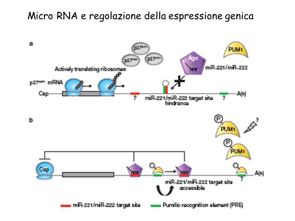 Micro RNA e regolazione della espressione genica