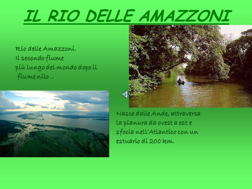 IL RIO DELLE AMAZZONI Rio delle Amazzoni. Il secondo fiume