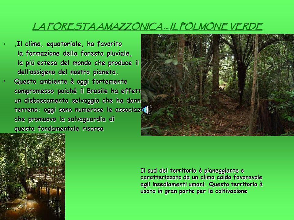 LA FORESTA AMAZZONICA … IL POLMONE VERDE