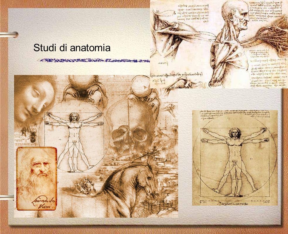 Studi di anatomia
