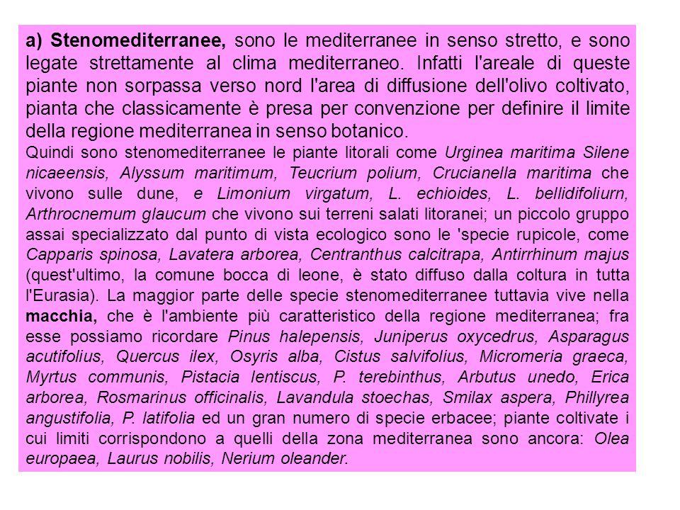 a) Stenomediterranee, sono le mediterranee in senso stretto, e sono legate strettamente al clima mediterraneo. Infatti l areale di queste piante non sorpassa verso nord l area di diffusione dell olivo coltivato, pianta che classicamente è presa per convenzione per definire il limite della regione mediterranea in senso botanico.