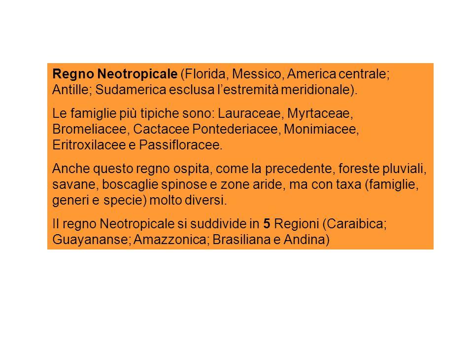 Regno Neotropicale (Florida, Messico, America centrale; Antille; Sudamerica esclusa l'estremità meridionale).