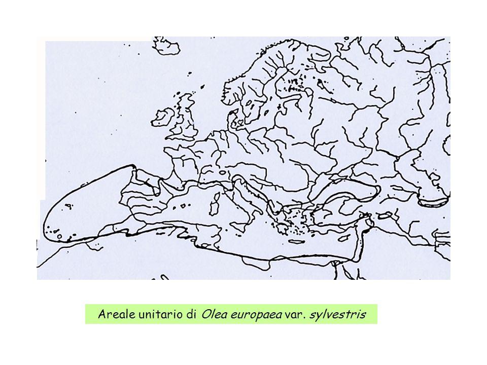 Areale unitario di Olea europaea var. sylvestris