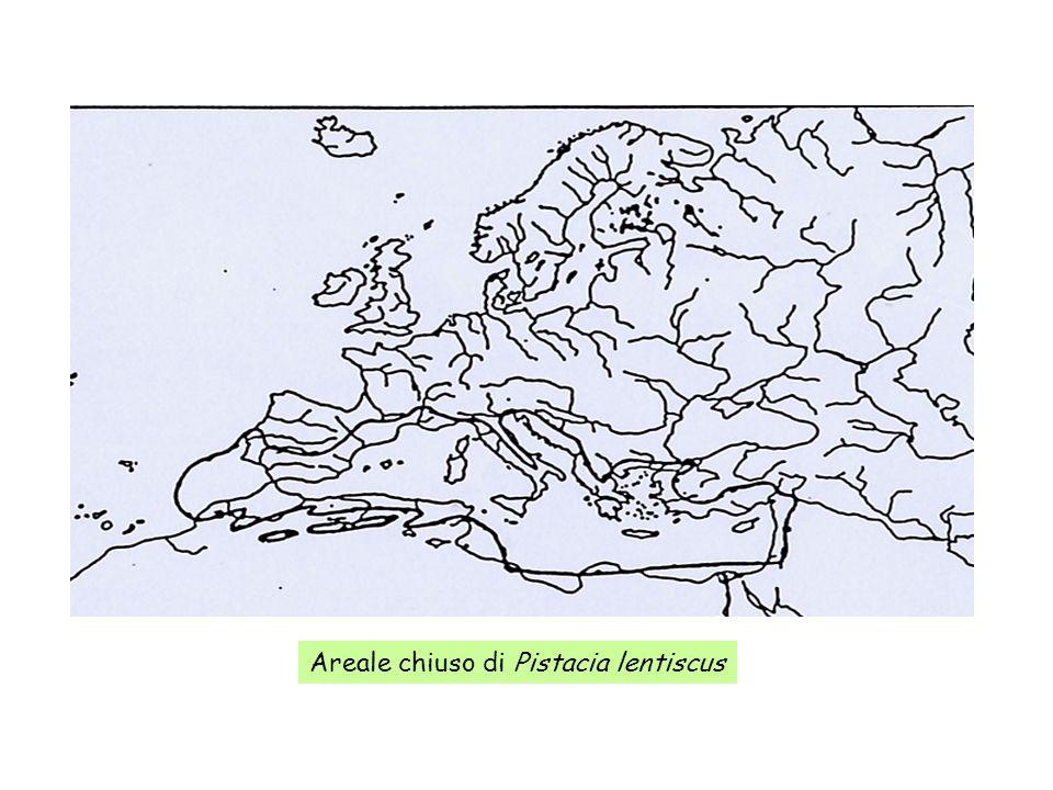Areale chiuso di Pistacia lentiscus