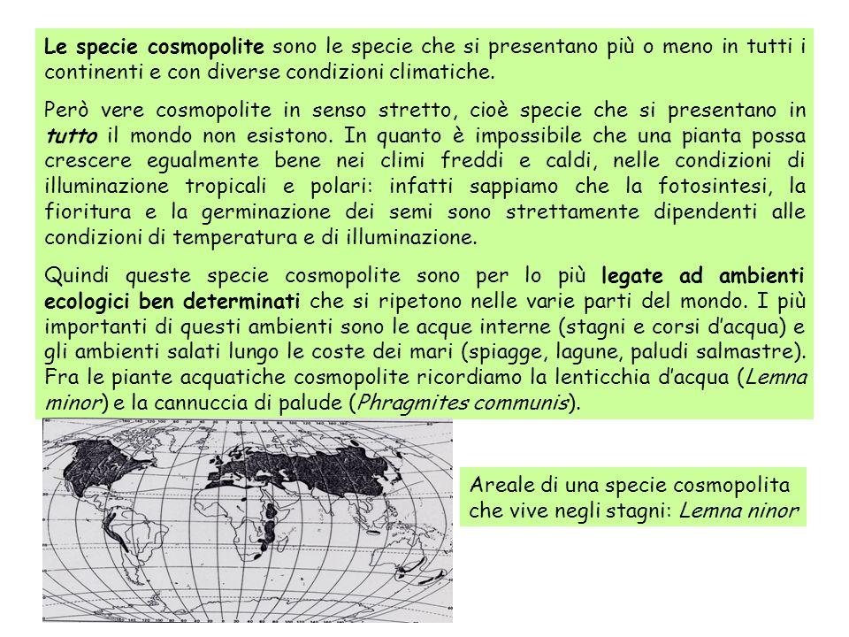 Le specie cosmopolite sono le specie che si presentano più o meno in tutti i continenti e con diverse condizioni climatiche.