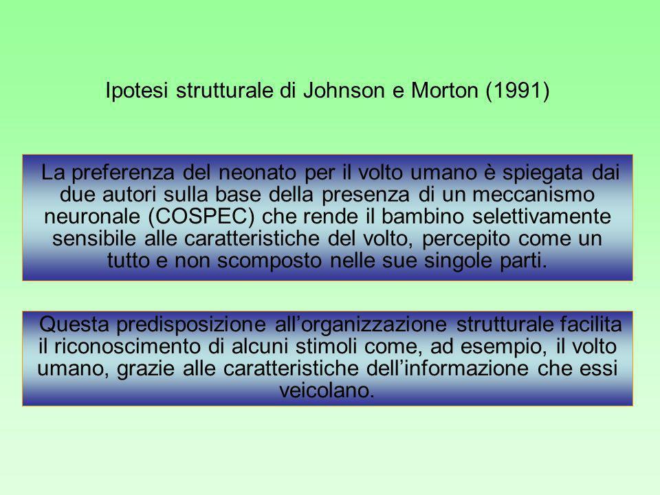 Ipotesi strutturale di Johnson e Morton (1991)