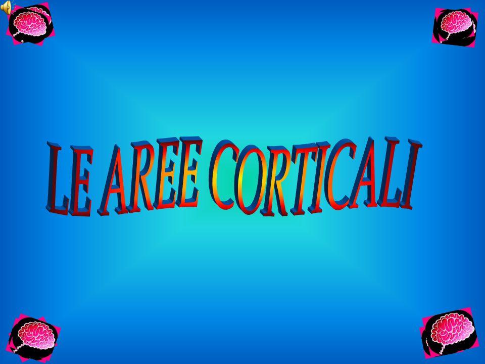 LE AREE CORTICALI
