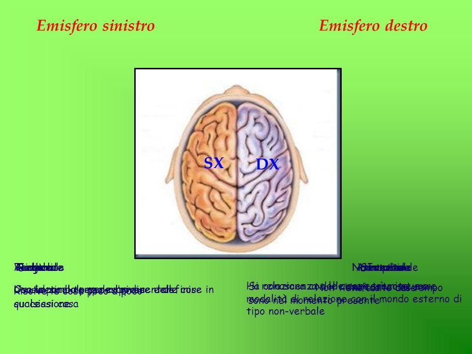 Emisfero sinistro Emisfero destro SX DX Analitico Temporale Verbale