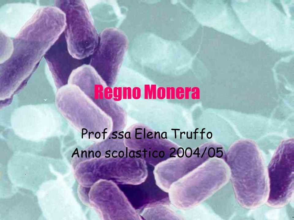 Prof.ssa Elena Truffo Anno scolastico 2004/05