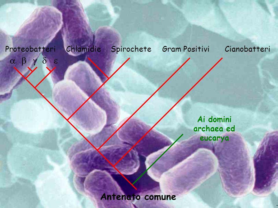 Ai domini archaea ed eucarya