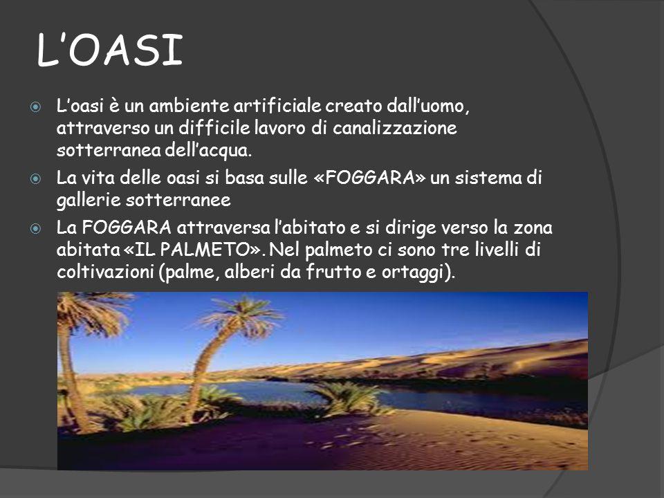 L'OASI L'oasi è un ambiente artificiale creato dall'uomo, attraverso un difficile lavoro di canalizzazione sotterranea dell'acqua.
