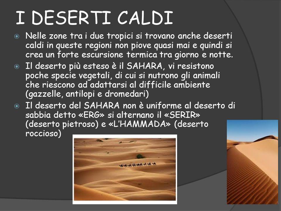 I DESERTI CALDI