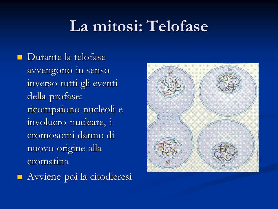La mitosi: Telofase