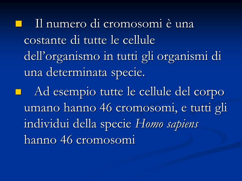 Il numero di cromosomi è una costante di tutte le cellule dell'organismo in tutti gli organismi di una determinata specie.