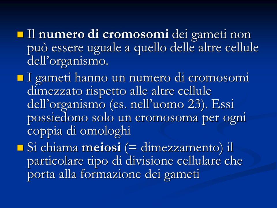 Il numero di cromosomi dei gameti non può essere uguale a quello delle altre cellule dell'organismo.