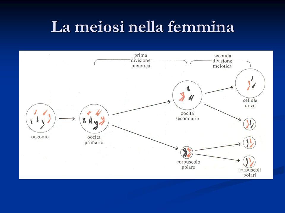 La meiosi nella femmina