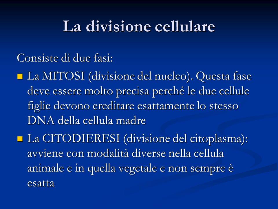 La divisione cellulare