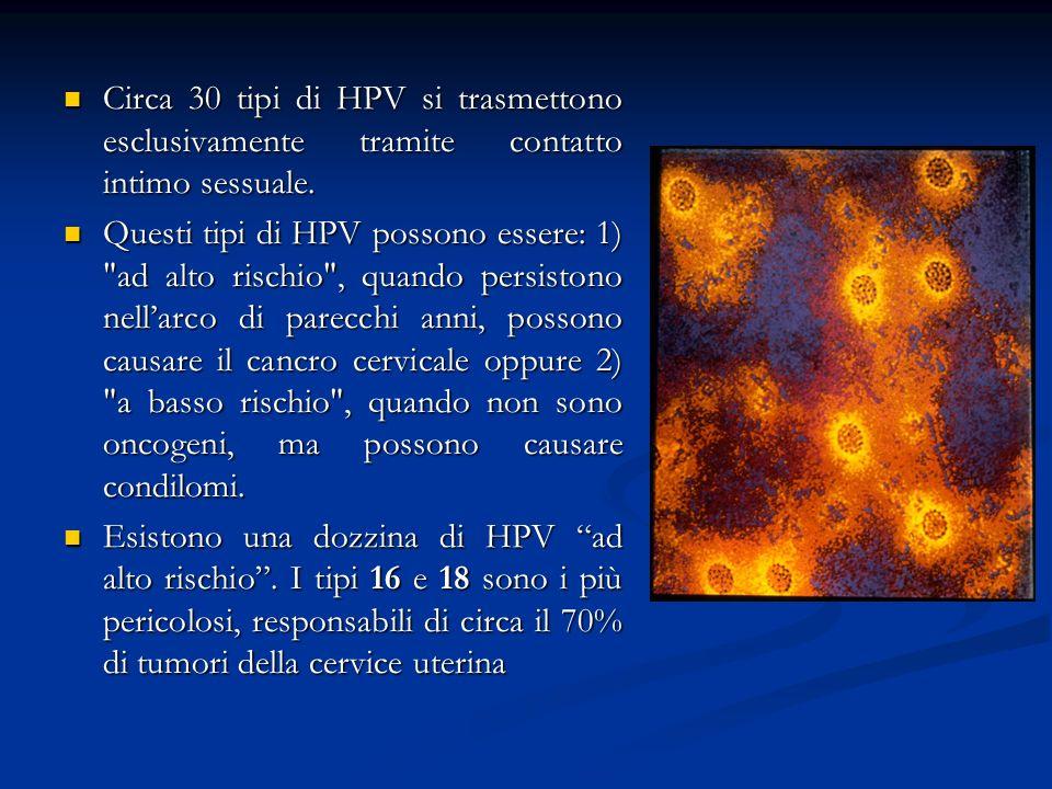 Circa 30 tipi di HPV si trasmettono esclusivamente tramite contatto intimo sessuale.