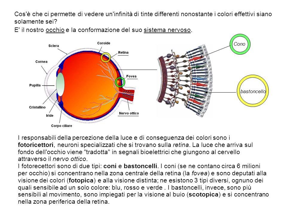 Cos è che ci permette di vedere un infinità di tinte differenti nonostante i colori effettivi siano solamente sei E il nostro occhio e la conformazione del suo sistema nervoso.