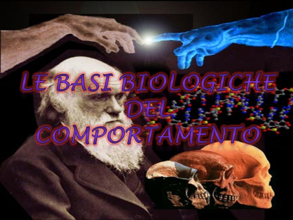 Le Basi Biologiche del Comportamento