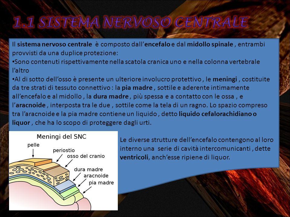 1.1 SISTEMA nervoso centrale