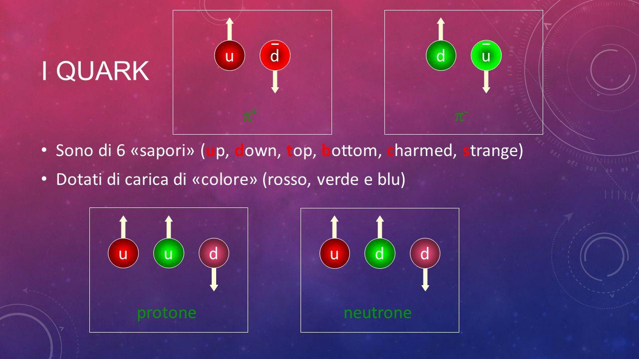 u d. p+ p- I quark. Sono di 6 «sapori» (up, down, top, bottom, charmed, strange) Dotati di carica di «colore» (rosso, verde e blu)
