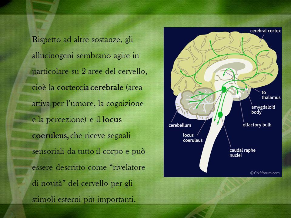 Rispetto ad altre sostanze, gli allucinogeni sembrano agire in particolare su 2 aree del cervello, cioè la corteccia cerebrale (area attiva per l'umore, la cognizione e la percezione) e il locus coeruleus, che riceve segnali sensoriali da tutto il corpo e può essere descritto come rivelatore di novità del cervello per gli stimoli esterni più importanti.