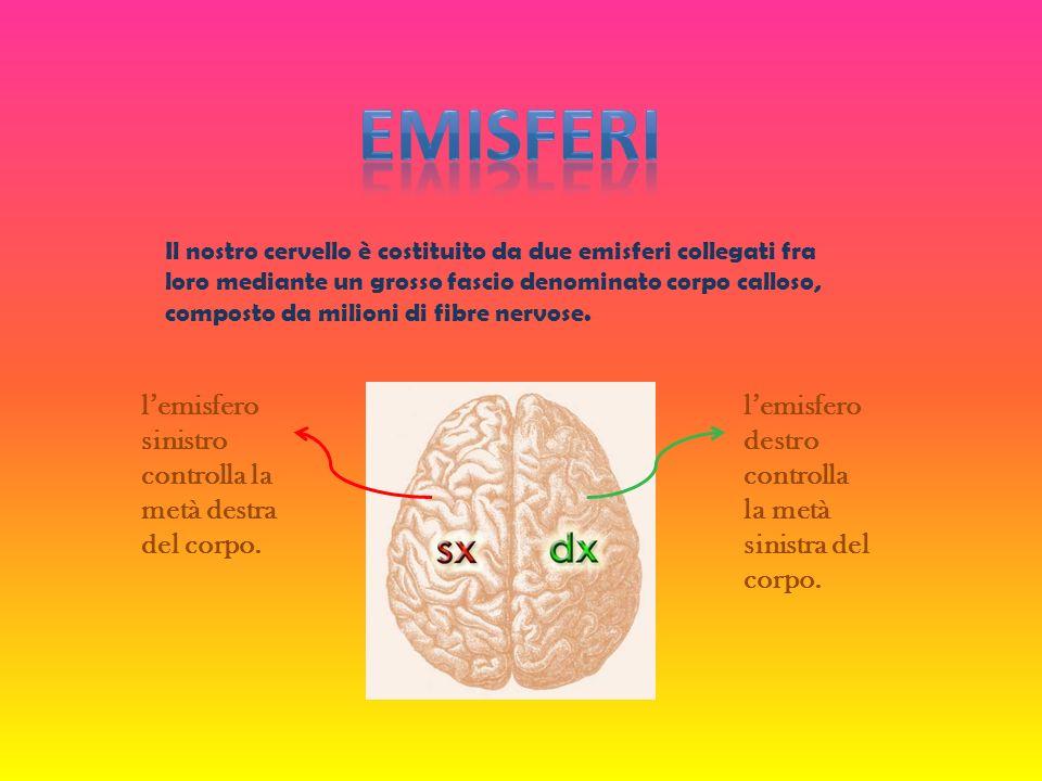 EMISFERI l'emisfero sinistro controlla la metà destra del corpo.