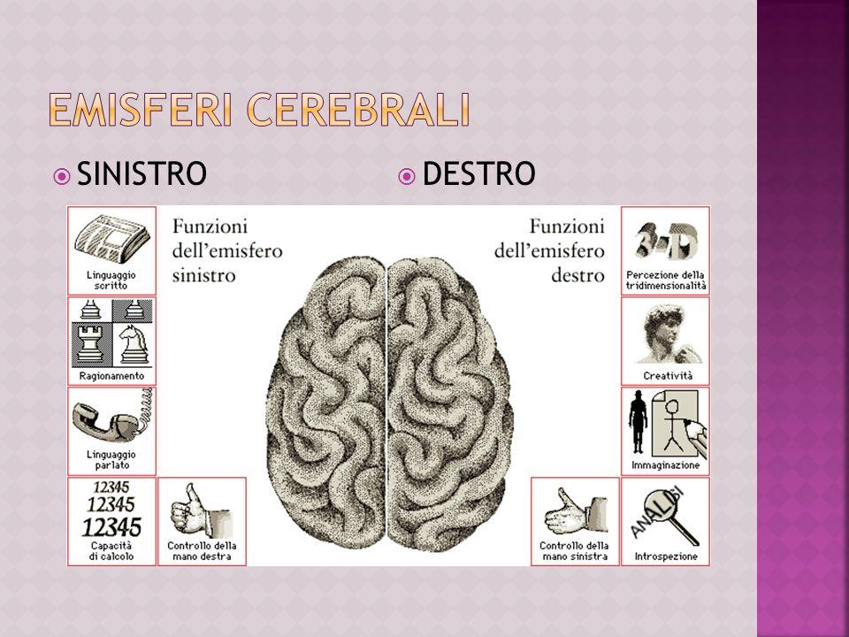 Emisferi cerebrali SINISTRO DESTRO