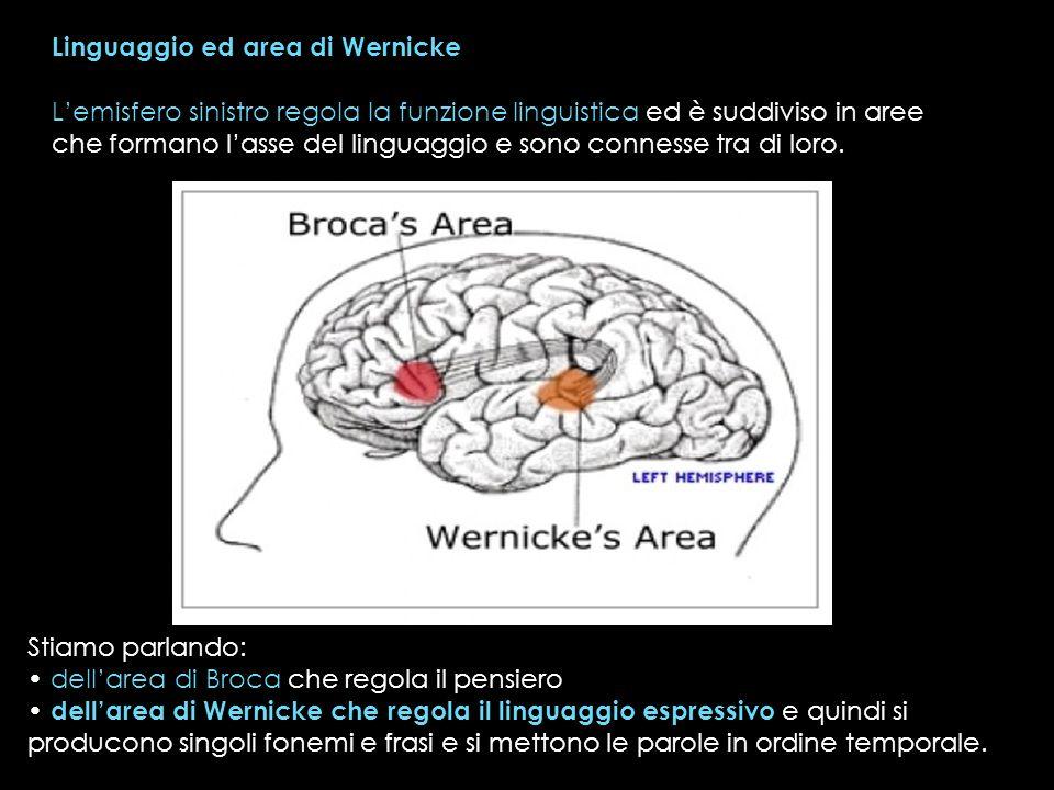 Linguaggio ed area di Wernicke